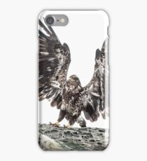 Immature Eagle, Belle Chain Islets iPhone Case/Skin