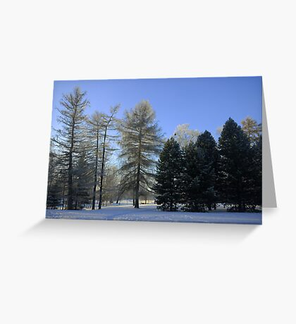 Tree groups Greeting Card