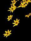 Floating Flowers 2 by Debbie Pinard