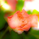 a single rose for you by Dean Messenger