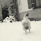 chicken in the snow by AbsintheFairy