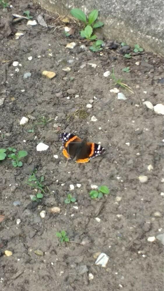 Merch #42 -- Red Admiral Butterfly by Naean Howlett-Foster