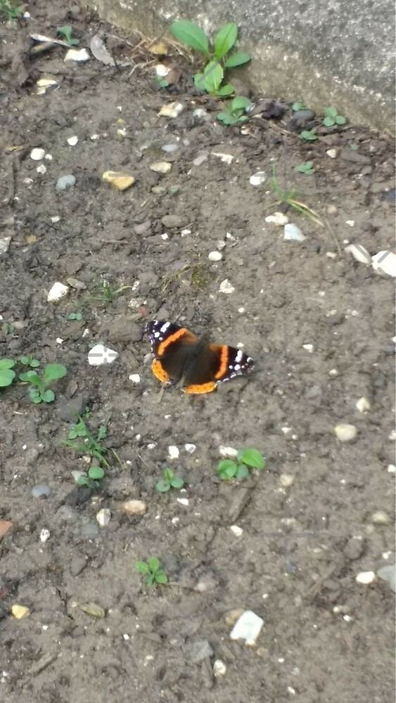M.I. #42 |☼| Red Admiral Butterfly (Pearson Park) by Naean