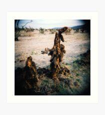 Cactus Men II, Anza Borego, CA February 2010 Art Print