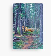 Rushing River Provincial Park Metal Print