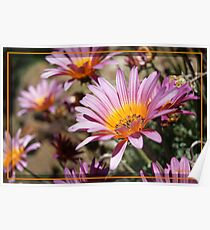 Daisies are like sunshine to the ground Poster