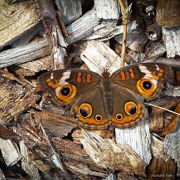 A Common Buckeye by hannahsview