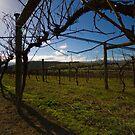 Yileena Park Bare Vines by Di Jenkins