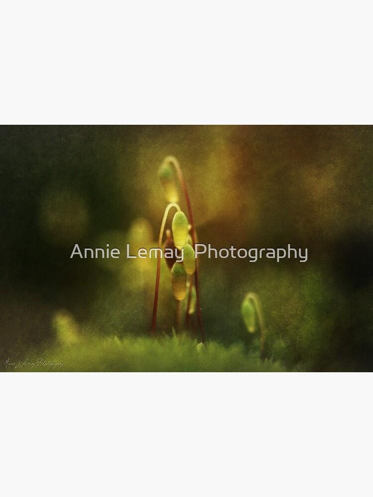 November's Moss by ajlphotography