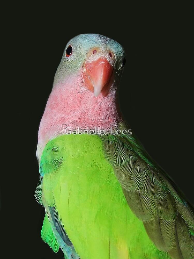 Princess of Parrots! by Gabrielle  Lees