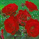 Painted Roses - a beautiful rose bush by Timothy Accardo