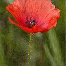 Poppy Oil Effect by Glen Allen