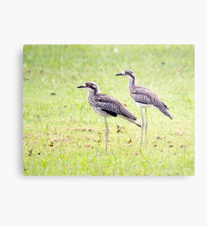 Stand Tall - curlews Metal Print