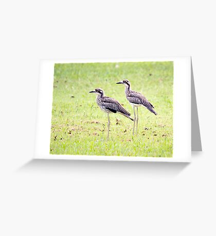 Stand Tall - curlews Greeting Card