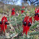 Flinders Ranges - South Australia by Michael Selge