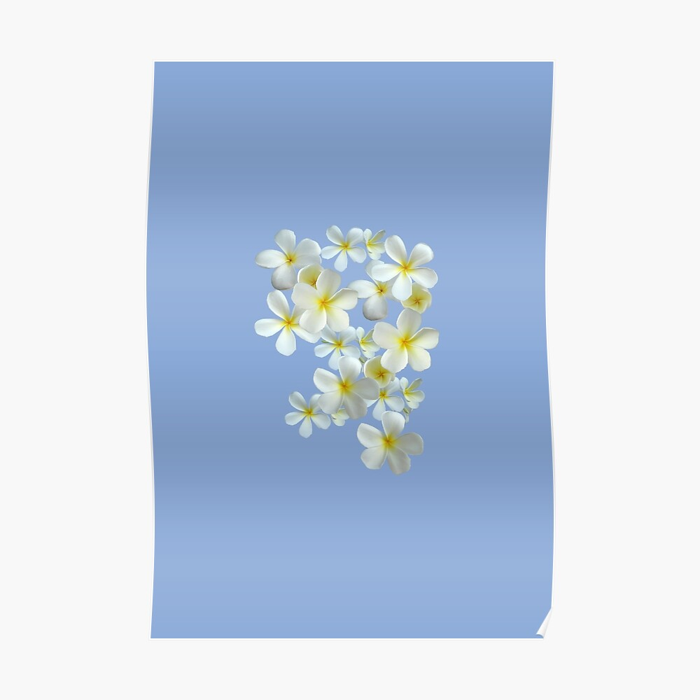 Frangipani - Weiß und Gelb Poster