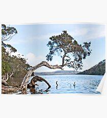 Tree - Walpole Poster