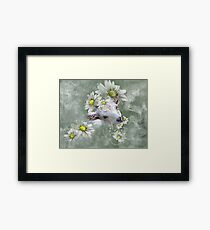 Don't Eat the Daisies Baby Goat Framed Print