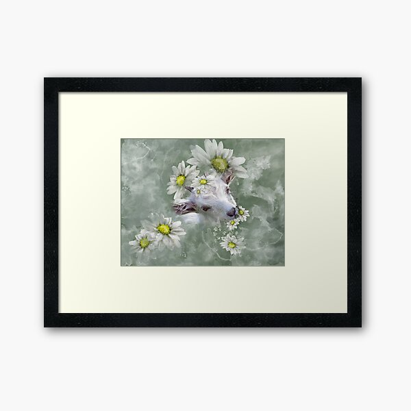 Don't Eat the Daisies Baby Goat Framed Art Print
