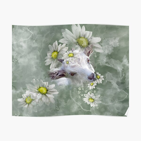 Don't Eat the Daisies Baby Goat Poster