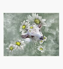 Don't Eat the Daisies Baby Goat Photographic Print