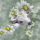 Don't Eat the Daisies Baby Goat by IconicTee