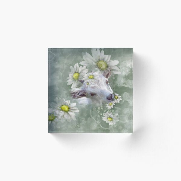 Don't Eat the Daisies Baby Goat Acrylic Block