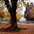 Pearson Park - Hull by technochick
