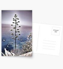 Vernazza Postcards