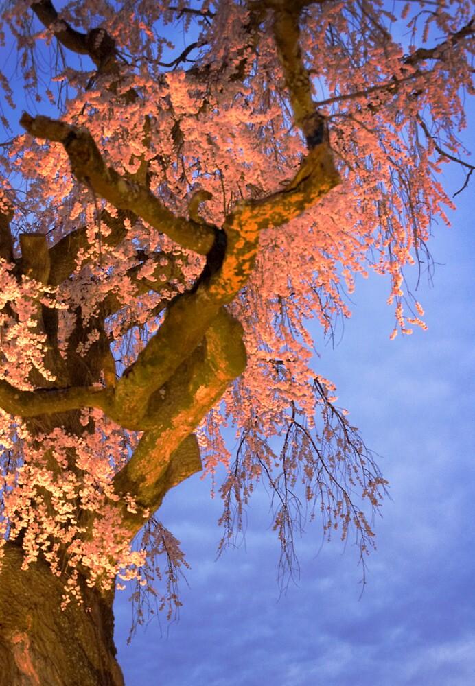 Night Blossoms by Diana Mankowski