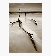 life, even after death... Photographic Print
