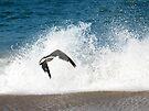 Ocean Gull by Chelsea Kerwath