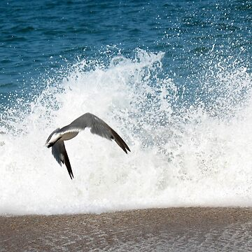 Ocean Gull by ChelseaKerwath