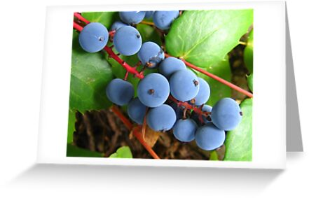 oregon grapes on the vine by axieflics