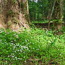 Patch of Sunshine - New Jersey Woods by Timothy Accardo