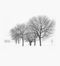 Stormy Winter Trees - Lake Michigan Photographic Print