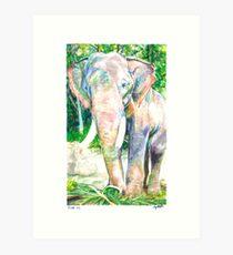 For Weezie (Elephant) Art Print