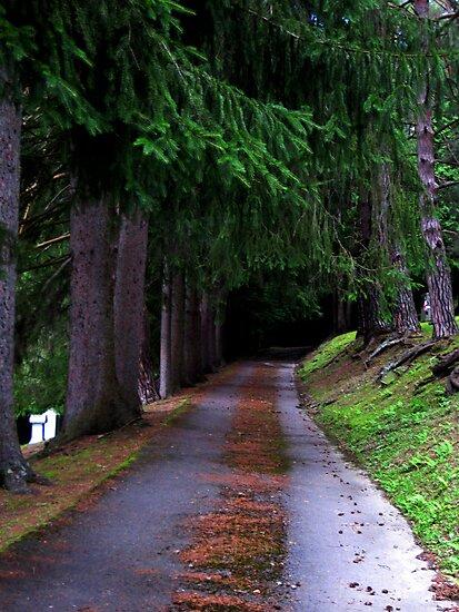 Lonely Walk by Bobbie Bonebrake