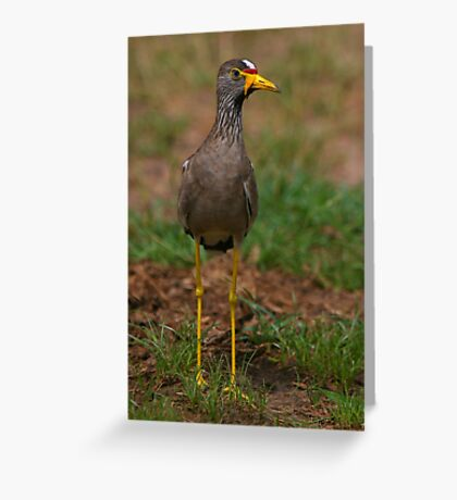 African Wattled Lapwing Greeting Card