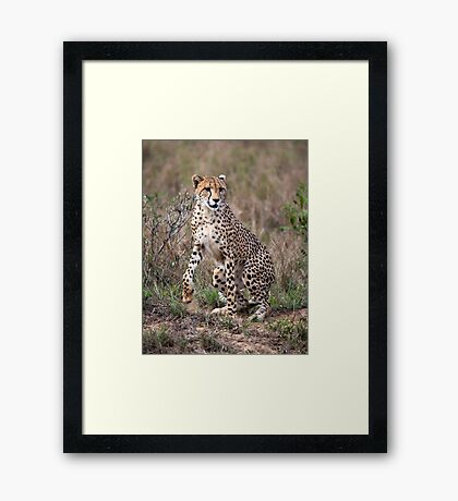 Spring to action ! Framed Print