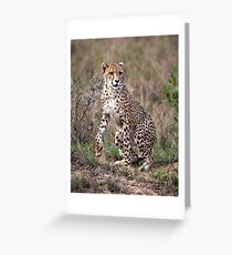 Spring to action ! Greeting Card