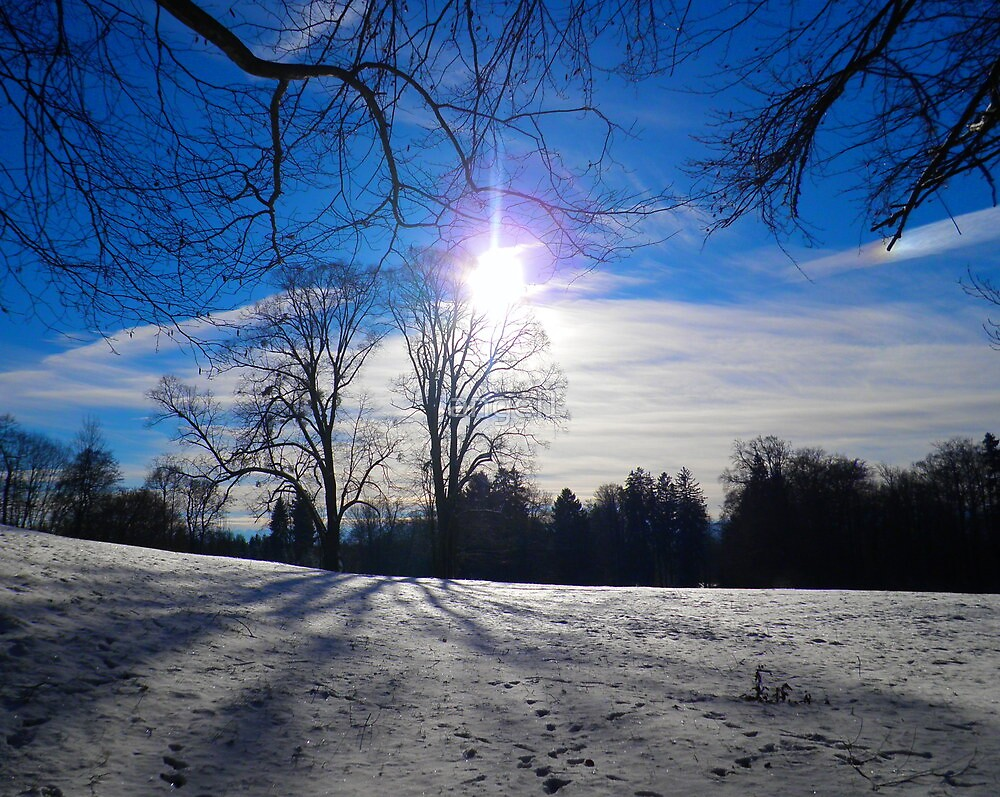 Winter Sun  by ©The Creative  Minds