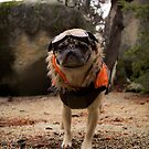 The Impatient and Prepared Adventure Pug by pugventurephoto