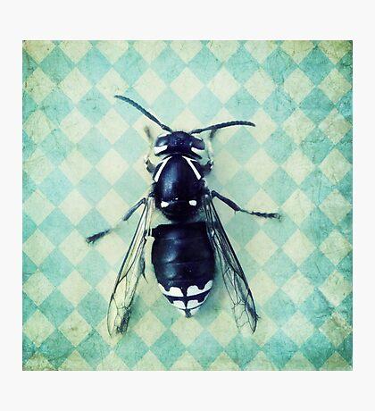 The hornet Photographic Print