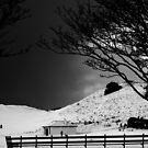 Snow by Mandy Kerr