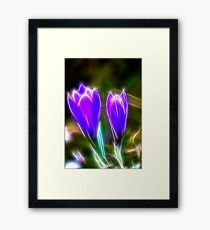 Sparkling Crocus Framed Print