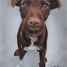 Patterdale Terrier puppy, Joey by cathyscreations