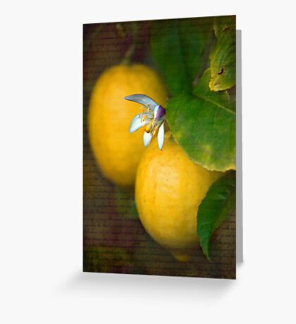 Sweet Lemon Greeting Card
