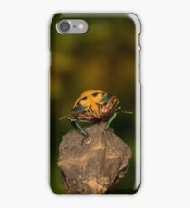 Orange stink bug 002 iPhone Case/Skin