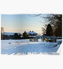 Winter scene, The Rower, County Kilkenny, Ireland Poster
